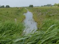 Graben zwischen Kuh- und Schaffenne Juni 2014