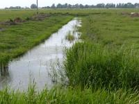 Quergraben im Osterkoog Juni 2014