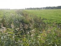 Mittelgraben 1 im Osterkoog vor den Arbeiten (2)