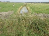 Mittelgraben 1 im Osterkoog vor den Arbeiten (3)