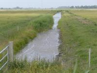 Mittelgraben 1 im Osterkoog im Juni 2014