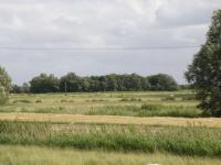 Warft der Rosenhofes von Norden Juni 2014