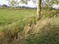 Baumbestand an den wegbegleitenden Gräben vor Beginn der Maßnahmen