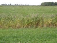 Weidefläche im Osterkoog vor Umsetzen der Maßnahmen