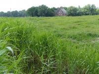 Blick auf den Rosenhof Juni 2014