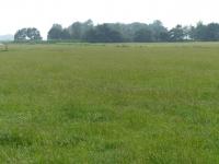 Weideflächen im Osterkoog Juni 2014