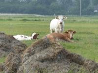 Tiere im Osterkoog Juni 2014